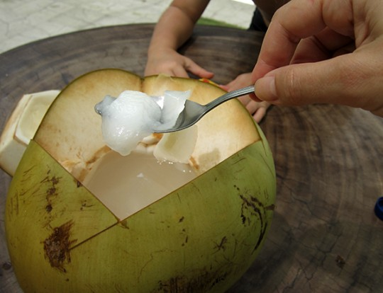 kokos paleo